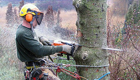 large tree removal price