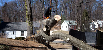 tree removal Lake Waukomis, MO