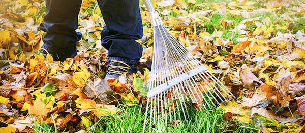 leaf removal Greenbush, ME