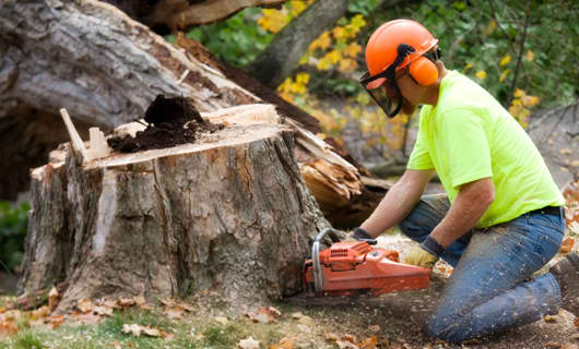 stump removal Menominee, WI