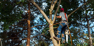 tree trimming Hill, WI